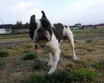 犬は喜び、庭駆け回り